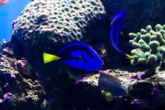 deep sea fish(0.0), invertebrate(0.0), coral reef(1.0), coral(1.0), fish(1.0), coral reef fish(1.0), organism(1.0), marine biology(1.0), stony coral(1.0), freshwater aquarium(1.0), underwater(1.0), reef(1.0), sea anemone(1.0),