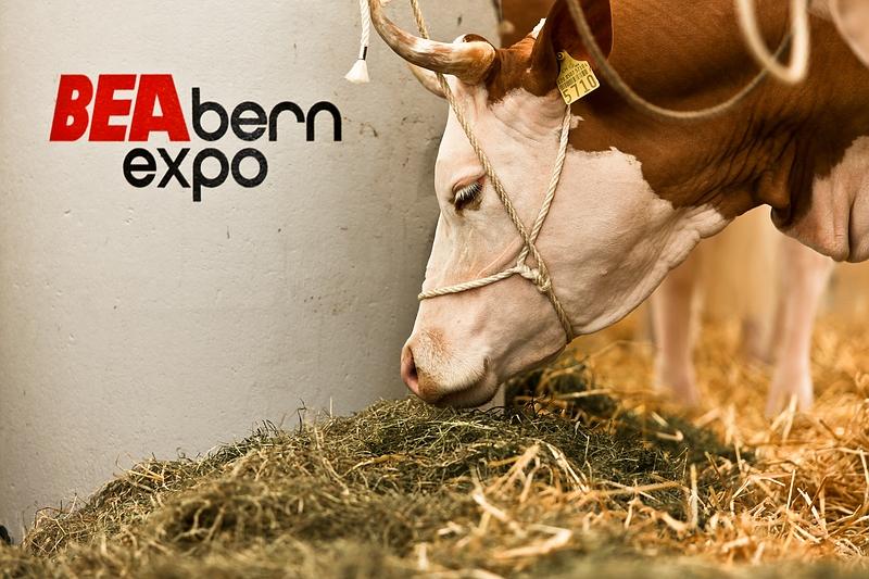 BEA Bern Expo