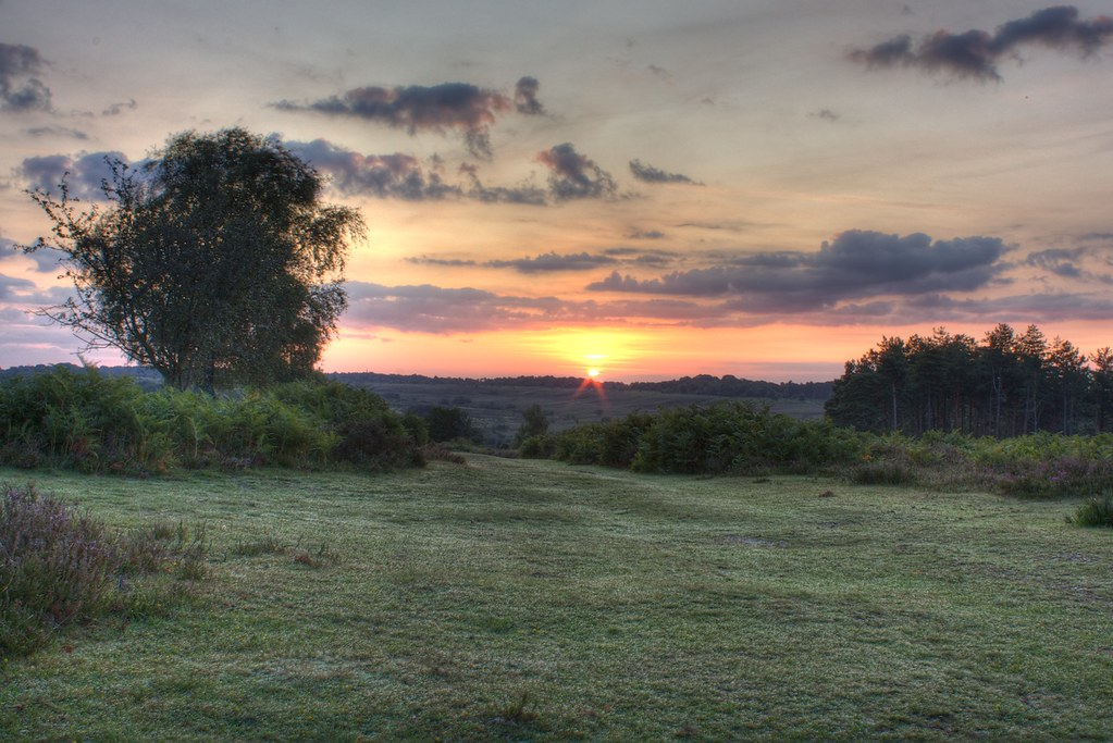 Sunrise in New Forest