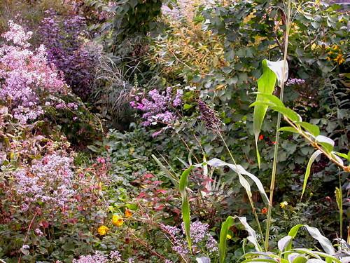Urban garden diversity