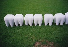 teeth | by miwa'photos