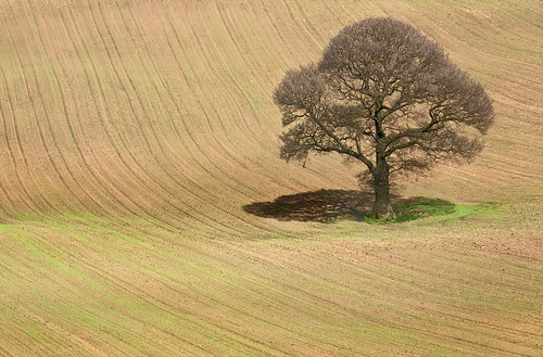 Tree in a Ploughed Field