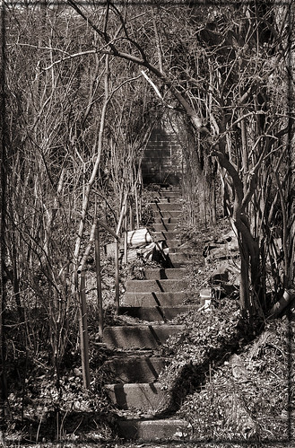Forgotten Stairs  by Amy Bailey