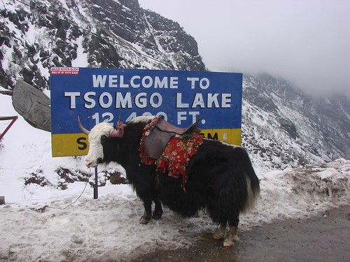 yak india snow motorcycle highaltitude northsikkim tsomgolake