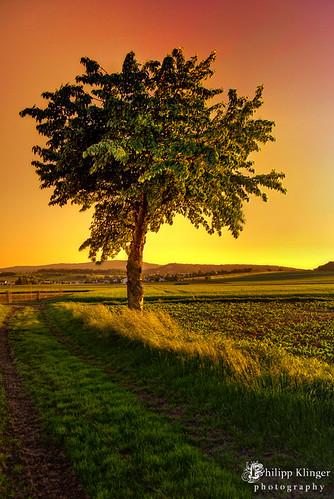 light sunset shadow red sky orange mountain color tree nature yellow germany landscape deutschland nikon colorful europa europe sonnenuntergang hessen horizon hill himmel foliage nik leafs philipp taunus greeen baum hdr hesse cokin badnauheim klinger topf175 flickrsbest singhray aplusphoto d700 wisselsheim