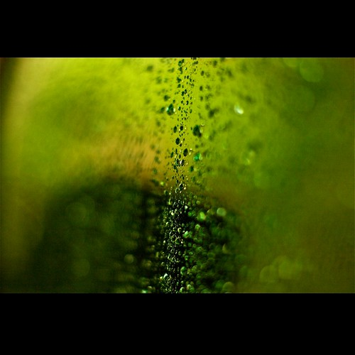 green nature rain drops raw raindrops throughaglass
