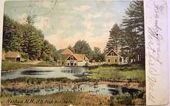 Vintage Postcard - U.S. Fish Hatchery, Nashua, New Hampshire