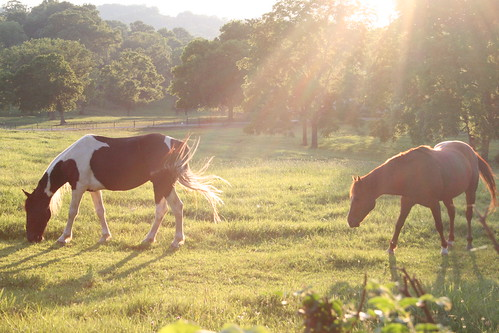 horses horse sun love grass happy farm felid aniamls rideemcowgirl