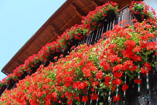 Mettete altri fiori sui vostri balconi!  -  Put more flowers on your balconies!