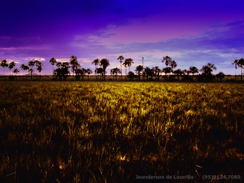 life longexposure light sunset brazil sky brasil clouds sunrise landscape interestingness selva jungle aurora manaus animalplanet amazonas nationalgeographic roraima savage amazonia boavista buritis lavrado buritizal