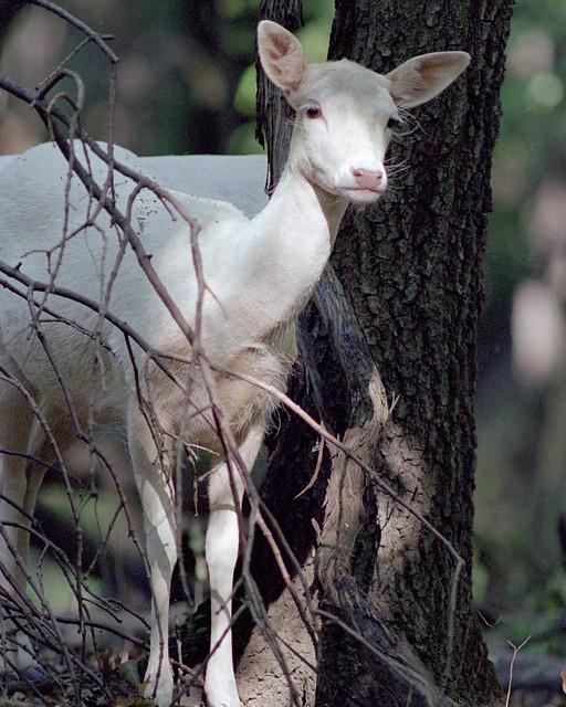 Image Result For Deer Dogs