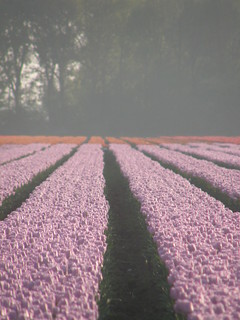Spring in Lelystad (Holland)