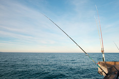 fishing, sea, recreational fishing, surf fishing, big game fishing,