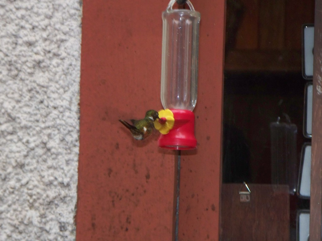 Hummingbird - Monteverde,  Costa Rica
