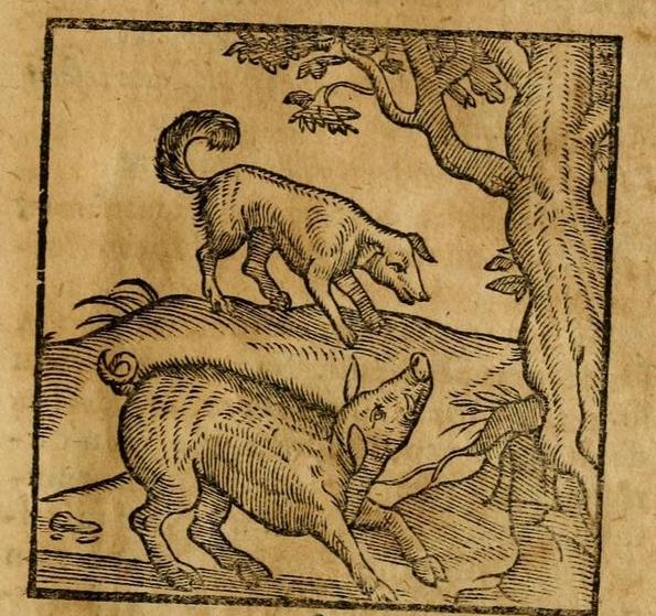 Sus et Canis