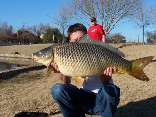 Bachman lake carp fish in april 24th everyone invited for Flying fish addison