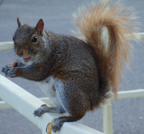 Happy Squirrel with a Skinny Tail