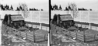 Guinea pig house at Seacliff Hospital, Dunedin, 9 November 1897