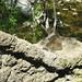 Small photo of Alum Rock Park trip