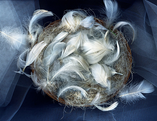 THE EMPTY NEST... by magda indigo