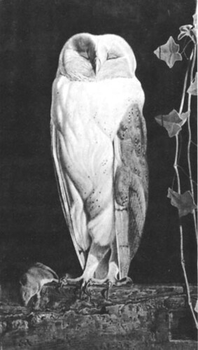the white owl