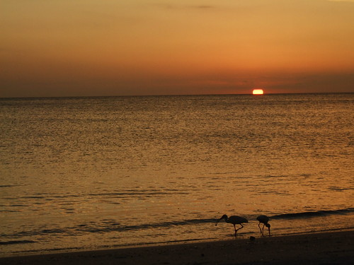 sunset usa florida naples conference vss