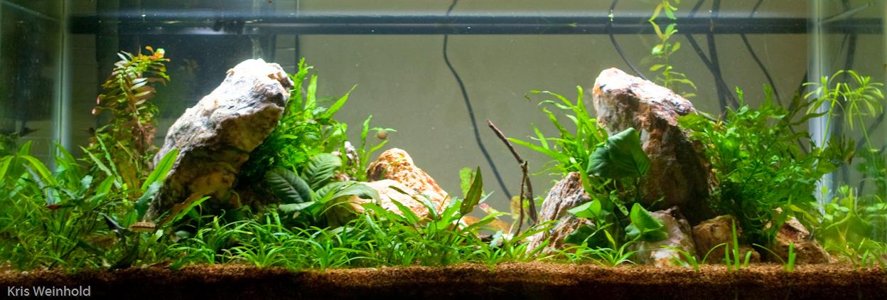 20l tank log guitarfish. Black Bedroom Furniture Sets. Home Design Ideas