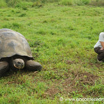 Audrey with a Giant Tortoise - Galapagos Islands