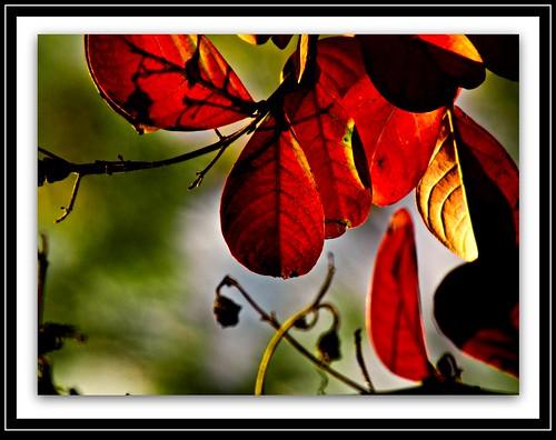 autumn trees autumncolours prideofindia