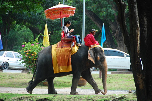 Tourist riding an Elephant in Ayutthaya