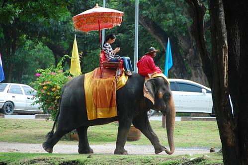 Riding Elephant Ayutthaya