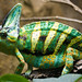 Veiled Chameleon - Photo (c) Sebastian Niedlich, some rights reserved (CC BY-NC-SA)