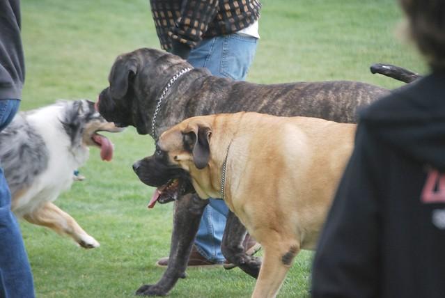 Simi Dog Park - Simi Valley, CA - yelp.com