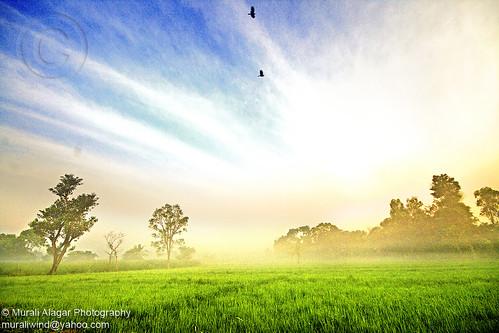 sky india mist green nature field birds clouds sunrise scene rays 1020mm karnataka mysore 450d canon450d muralialagar muralialagarphotography murali450d