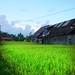 Small photo of Padi Field in Bali