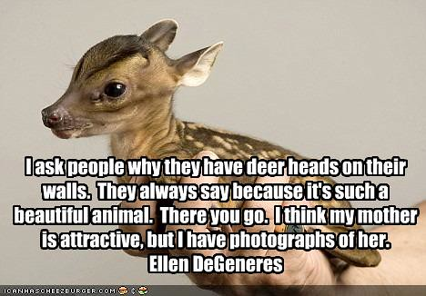 I ask people why they have deer heads on their walls by muriell