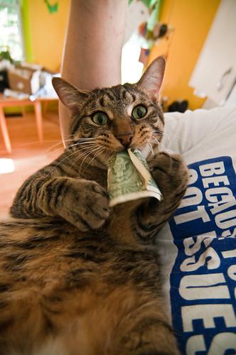 Best. Cat. Pic. Ever.