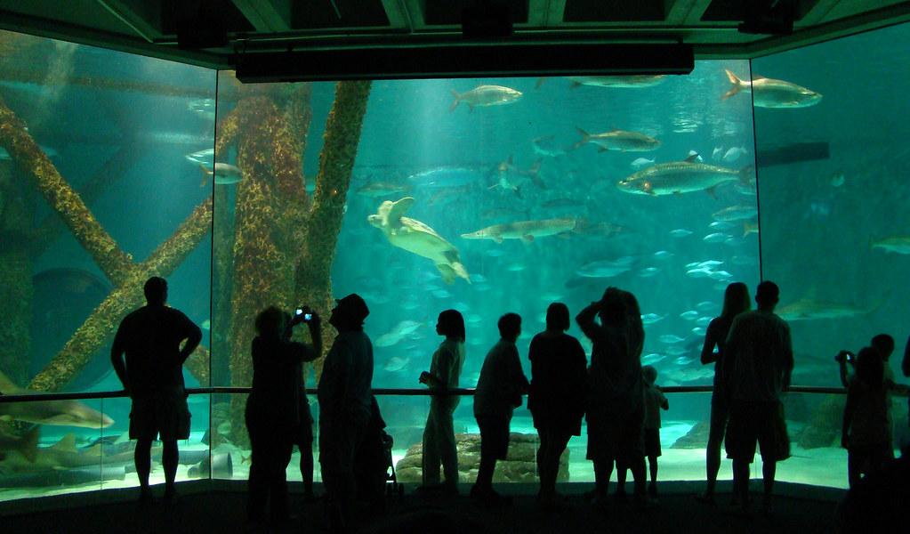 Dutchbaby Audubon Aquarium Of The Americas In New Orleans