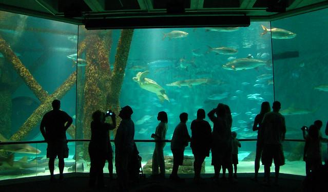 Dsc06319 Audubon Aquarium Flickr Photo Sharing