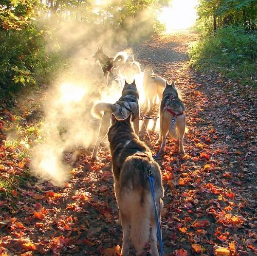 frosty morning breath