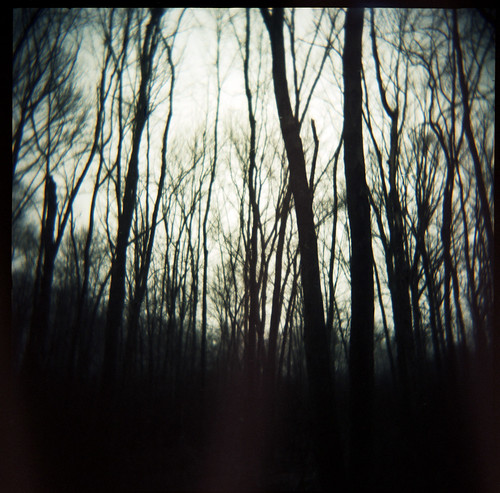 trees 120 film forest dark newjersey holga chatham portra greatswamp 400nc autaut