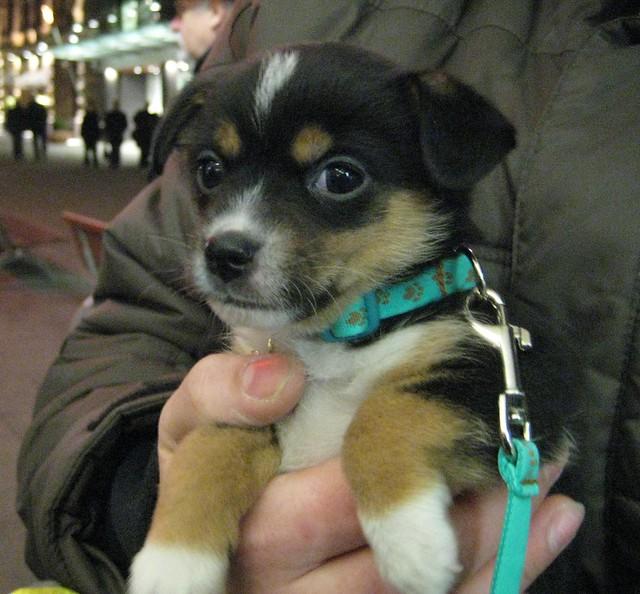 A tiny puppy