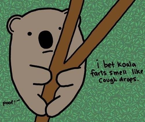 koala farts
