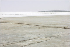 signs of life, kutch