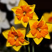 Small photo of Amity Daffodil Festival Contestents