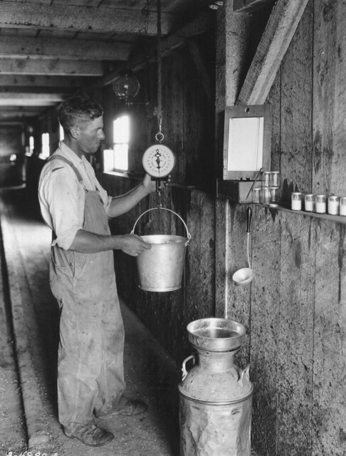 Roy Vanderwall weighing milk on his farm in the Muddy Creek community in Baker County, Oregon, July 23, 1925.