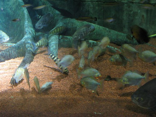 Dingle aquarium reptile forums for Are fish considered animals