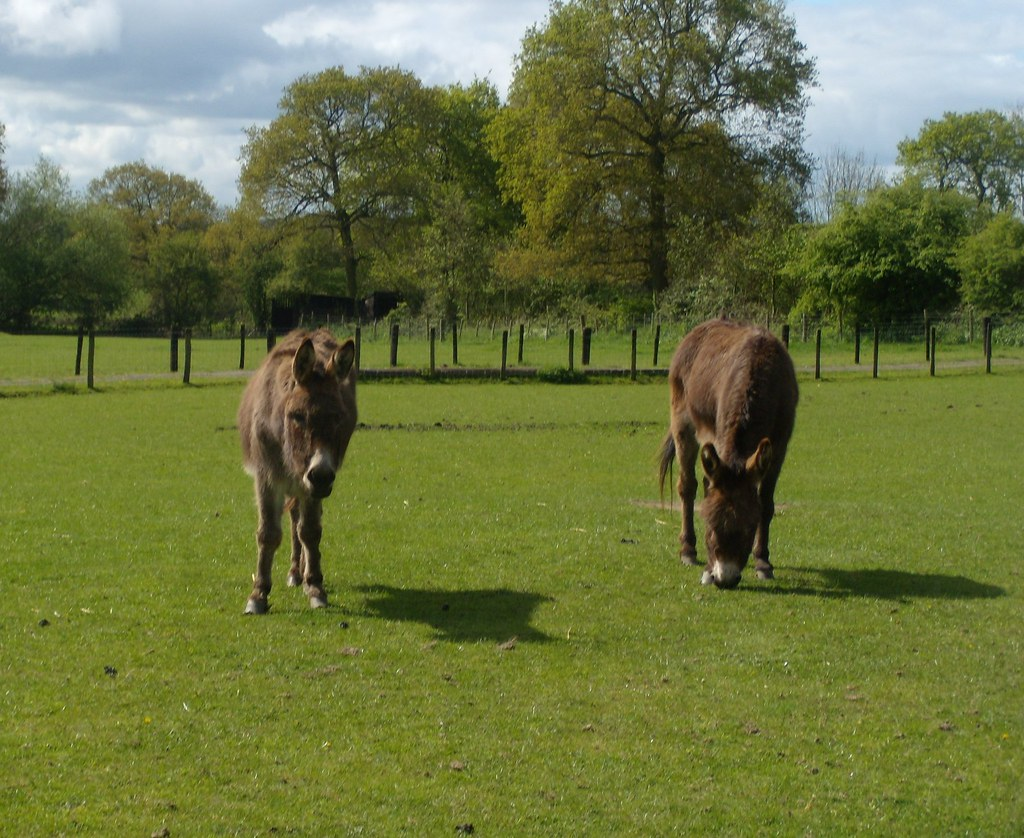 Donkeys Just in case you didn't know what they were. Hurst Green to Chiddingstone Causeway