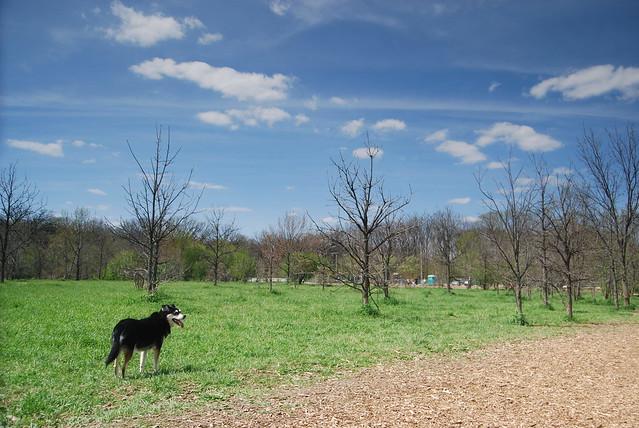 Fenced Dog Park Uk