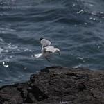 bird-flickr
